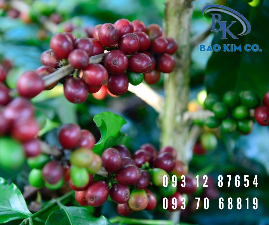 quy trình giấy chứng nhận lưu hành tự do (CFS) cho cà phê xuất khẩu